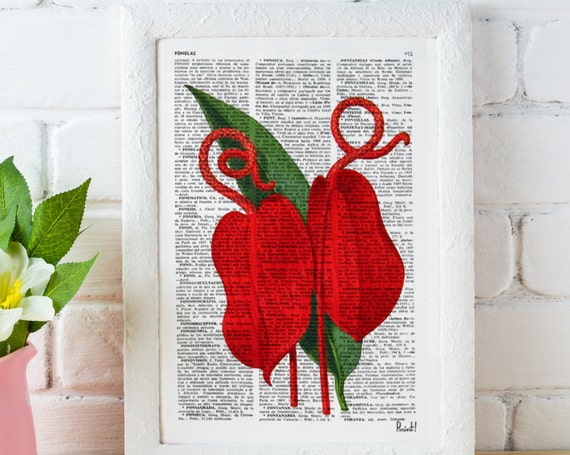 Red Anthurium flower- Vintage Botanical studio print on Vintage Dictionary Book page BFL056