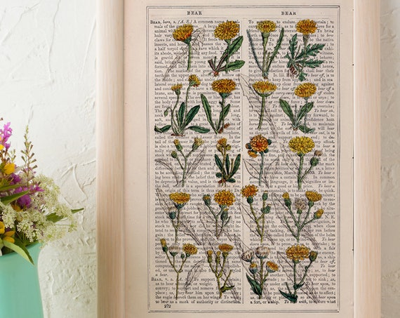 Dandelion collection Print on Vintage Dictionary Book page, Wild flora art, Wall art naturalist illustration  BFL214
