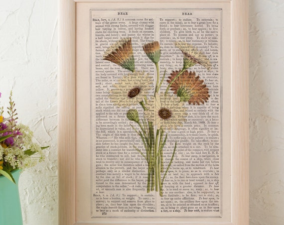 Christmas gifts for mom Aurora daisy flowers collection Print on antique book page. Aurora Daisy  Wild flora art BFL222