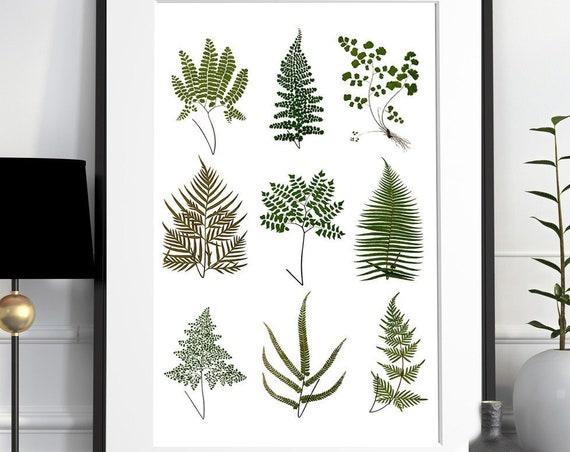 Wild ferns Poster print, Green ferns Poster, Green plants decor, Ferns Wild plants Housewarming BFL223WA3