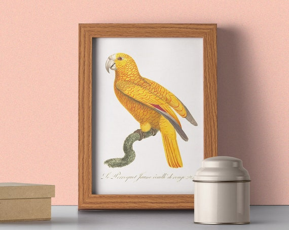 Yellow Parrot Exotic Bird wall art print ANI078WA4