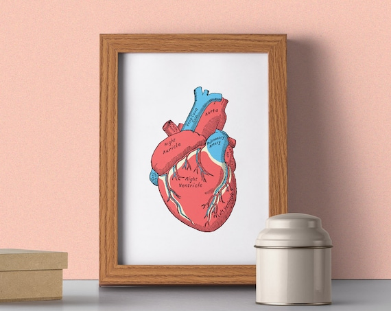 Human Heart school encyclopaedia style, Anatomical art, Anatomy art, Wall art decor, Medical, Science  SKA163WA4