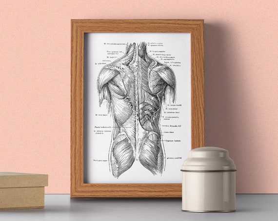 Human torso muscles detail, Spine parts, Anatomy art, Anatomical art, Wall art decor, Gift for doctor, , SKA165WA4