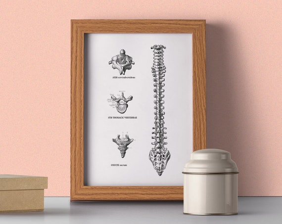 Christmas gifts for mom Human trunk vertebrae detail, Spine parts, Anatomy art, Anatomical art Gift for doctor, Trunk SKA164WA4