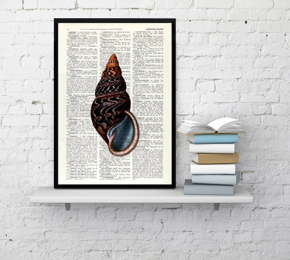 Art Print Sealife print Seashell III Print wall art poster print, shell print, wall hanging SEA017