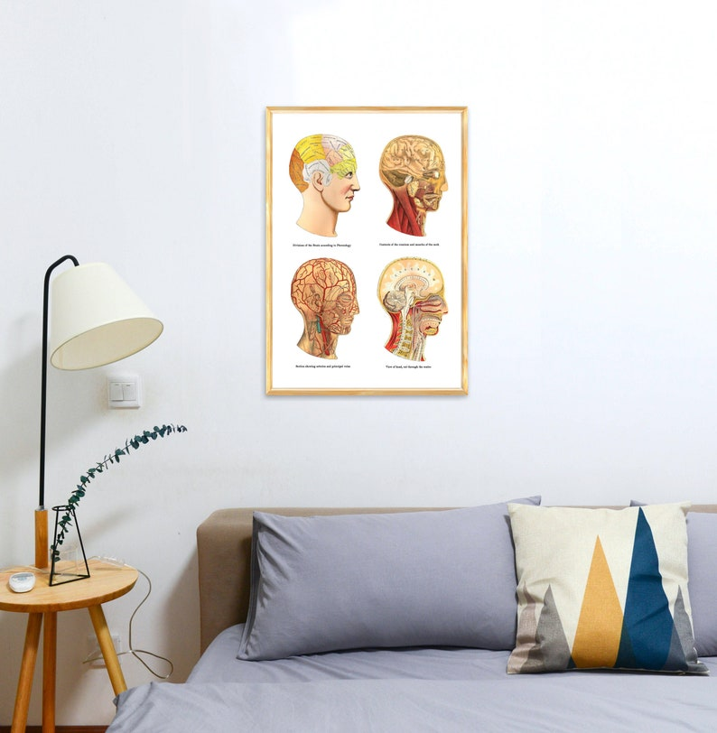 Study of the Brain Human Anatomy Art Anatomical prints wall image 0