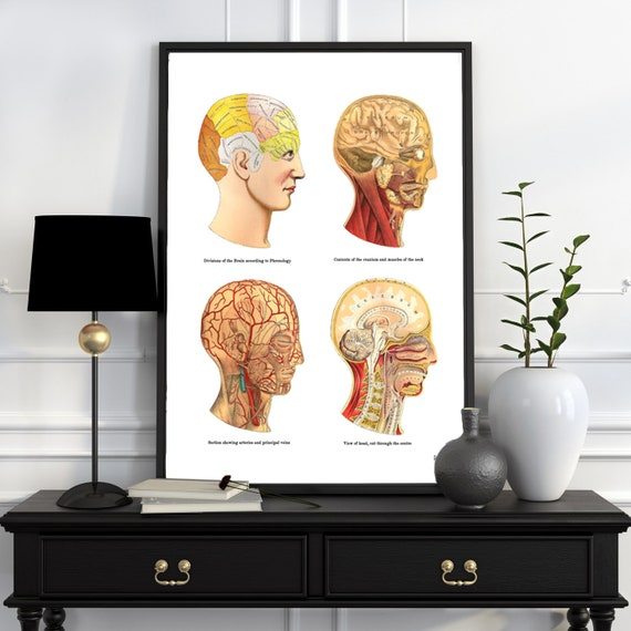 Study of the Brain, Human Anatomy Art, Anatomical prints, wall art poster, Human Head parts medical art SKA200WA3