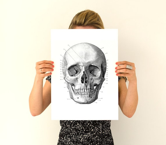 Human skull Poster, anatomical art, Skull art Anatomy wall art, Giclee art, Poster print, wall hanging wall art, SKA011WA3
