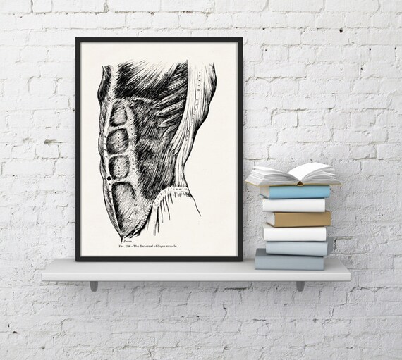 Abdominals Anatomy art decor  SKA026WA4