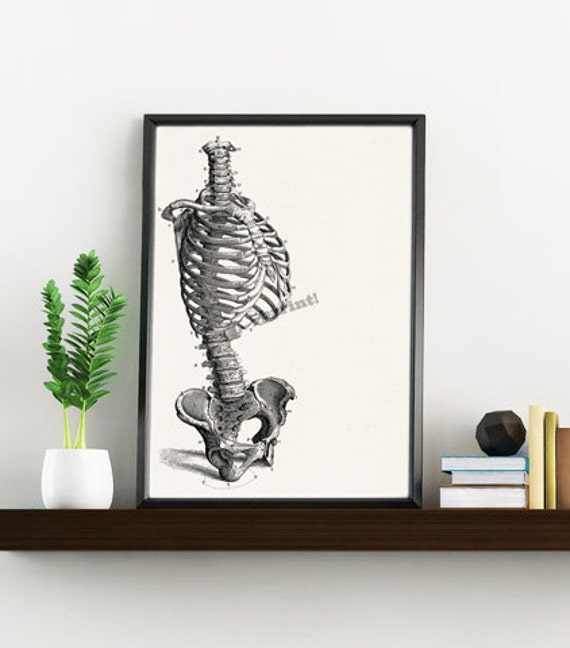 Skeleton Torso, Anatomy art, Anatomical art, Wall art decor, Anatomy, Medical gift Human anatomy SKA148WA4