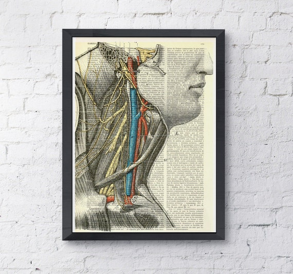 Christmas gifts for her Color neck study, Anatomy art prints, wall art, print color neck veins doctor office gift SKA056
