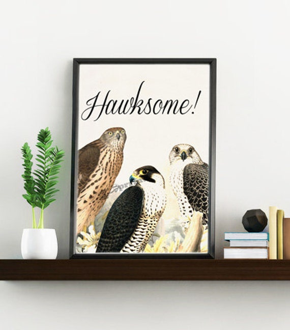 Awesome funny animal artHawksome hawks collage print ANI196WA4