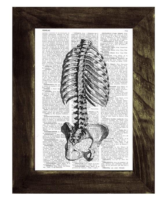 Art print Book - Skeleton Trunk Anatomy Study art  Print SKA040