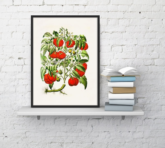 Kitchen Art- Tomatoes vegetables print Art, Giclee Print- wall art decor, Wall Hanging Veggies Kitchen poster BFL076WA4