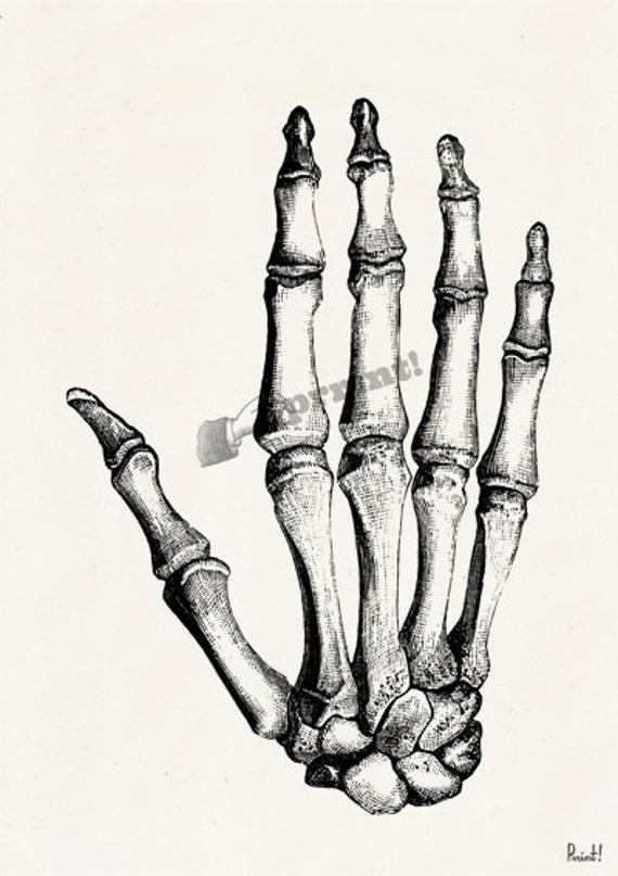 Hand Bones Anatomic Study Anatomy Art Anatomical Art Wall Etsy