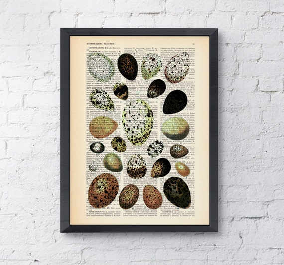 Egg collection, Wall art, Wall decor, Digital prints animal, Giclée, Vintage Book sheet, Nursery wall art, Prints ANI081