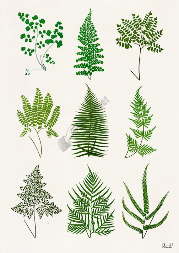 Christmas gifts for mom Art print green ferns collection , Wall art decor, Giclee print wall decor, Green nature study BFL225WA4