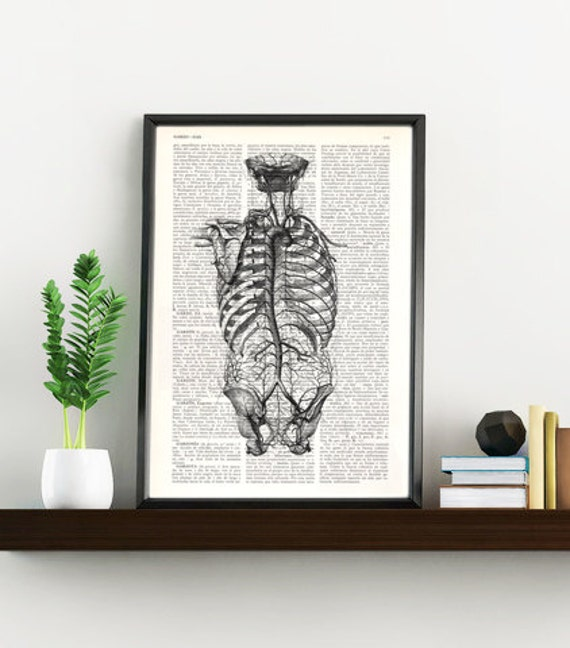 Human back anatomy Art Print -Anatomical art, giclee print SKA105