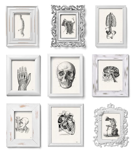 This set of Anatomy prints SALE this selection of prints for only sixty dollars. Anatomy collection  SET014