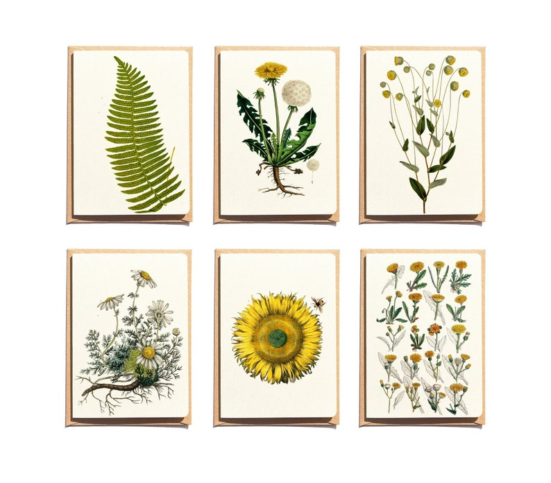Dandelion and Yellow flowers Note Cards  Set of 6  Floral image 0