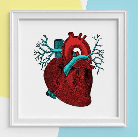 Red heart art Print Human anatomy print, Science student gift- Human heart Doctors Future doctor gift SKA057SQ1