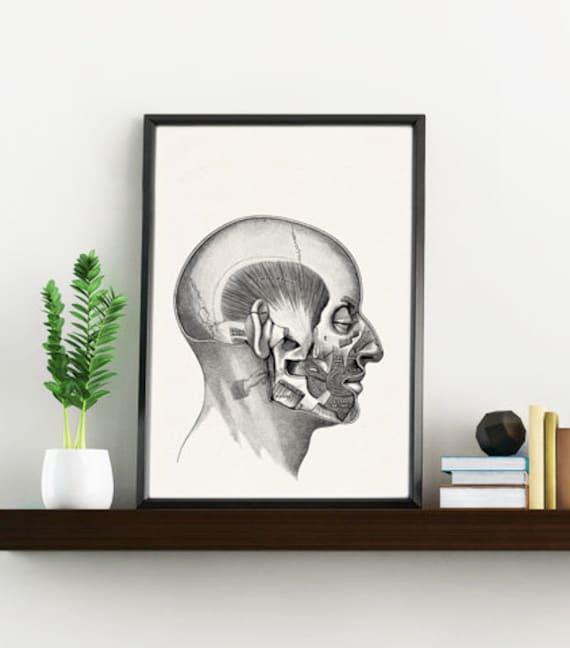 Side Human Head Mind Anatomy wall art  SKA122WA4