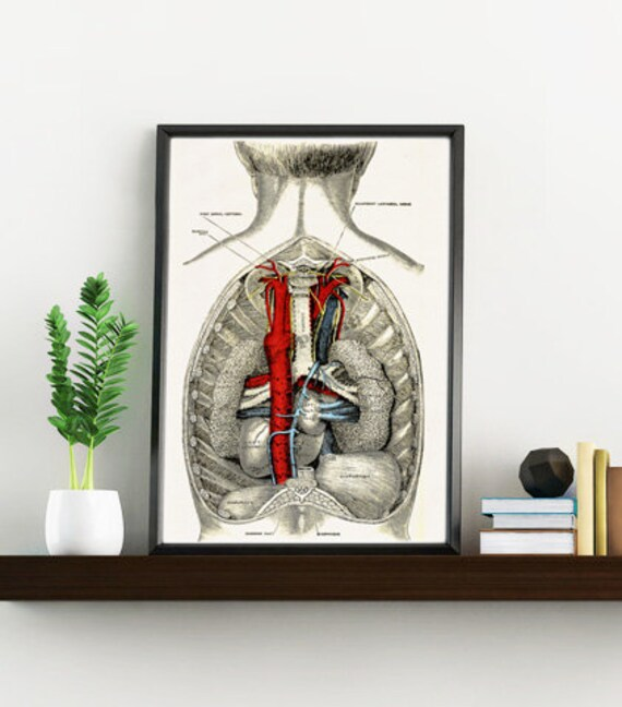 Open Human Back, Anatomical art, Anatomy art, Wall art decor, Gift for Doctor, Medical, Science art,  SKA051WA4