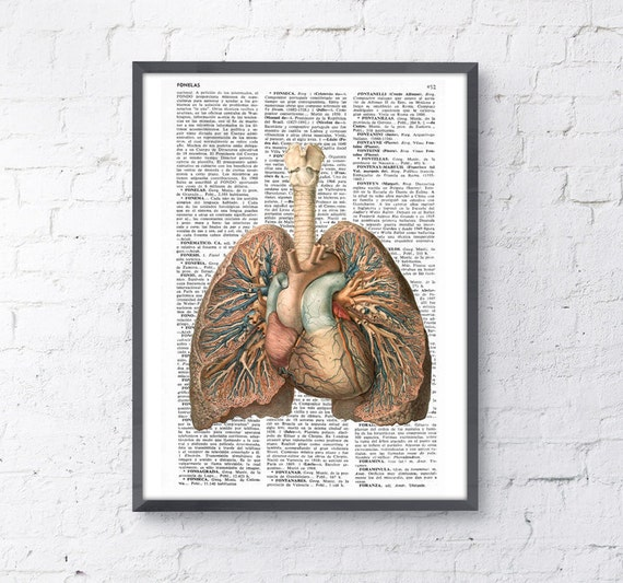 Christmas gifts for her Lungs and heart human Anatomy Print - Anatomy art gift, human anatomy art, lungs and heart art SKA102