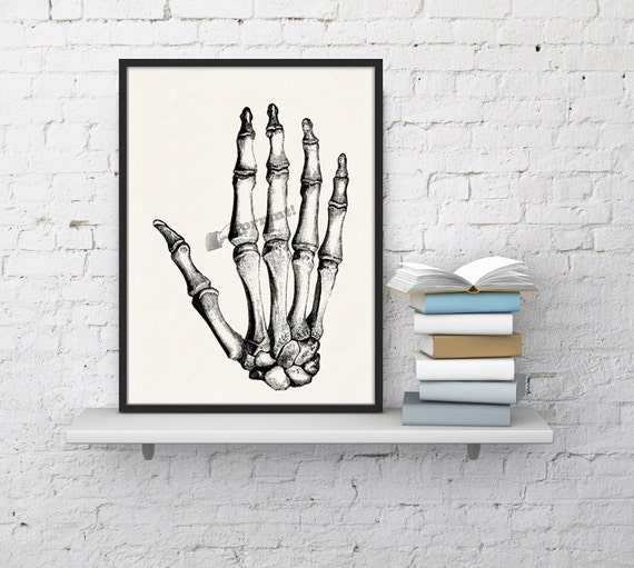 Hand Bones anatomic study,  Anatomy art, Anatomical art, Wall art, Wall decor, Anatomy, Medical gift, Wholesale, Gift for doctor, SKA020WA4