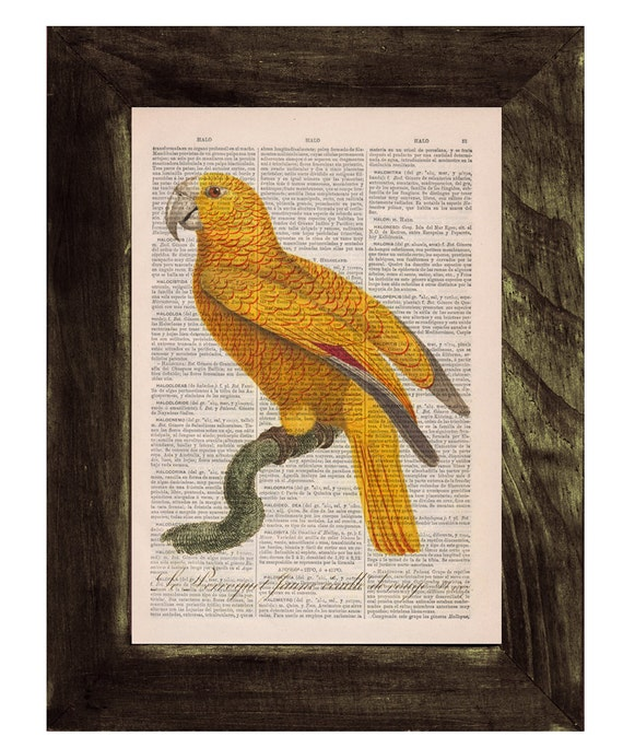 Christmas gifts for her Yellow Parrot Exotic Bird Dictionary print Book print Natural illustration Upcycled page Print Wall decor Art ANI078