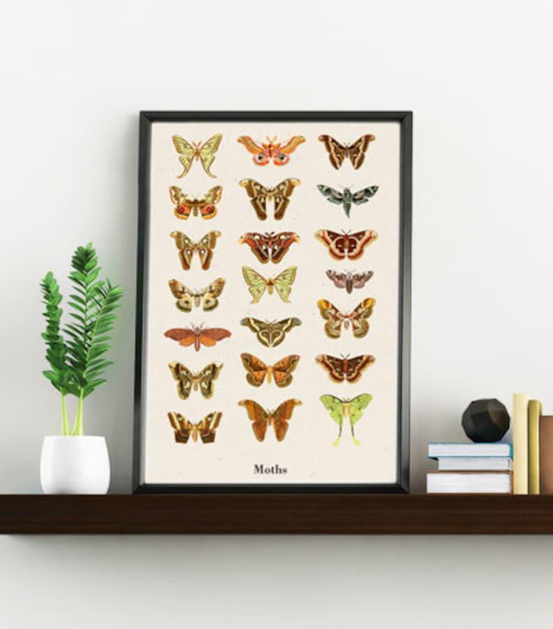 Moths Art print  Biology Wall art  Butterfly art  Science image 0
