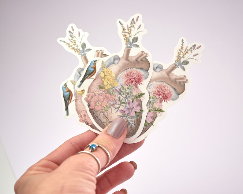 Clear Human heart stickers set  human anatomy art with image 0