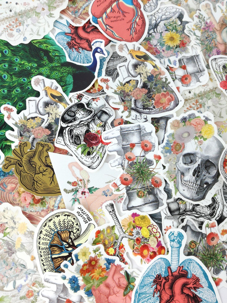 Mystery Sticker Set  Grab Bag  Anatomy Art  Blind Box  image 0