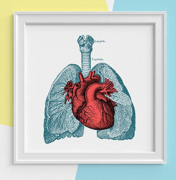 Lungs and heart Print  Human anatomy print Science student gift Human heart and lungs art Doctors office gift  SKA030SQ1