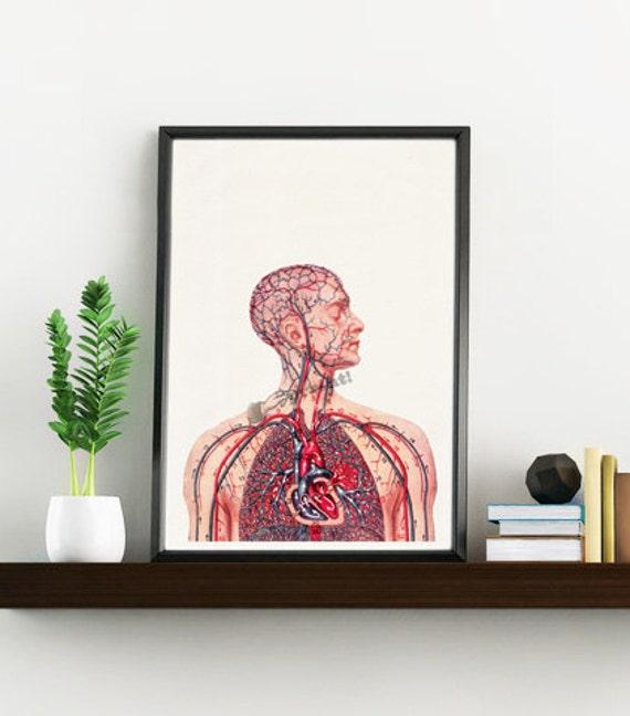 Human Heart and arteries medical wall art SKA050WA4