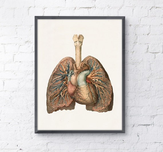 Christmas Gifts Lungs And Heart Anatomical Art Anatomy Art Etsy