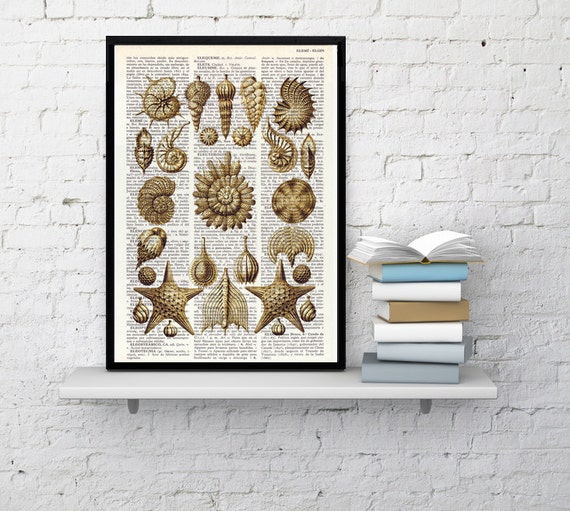 Art Print- Book print Set Collage Shell , Wall art Print on Old Book page Wall decor, sea shells print, Sea life shell SEA102
