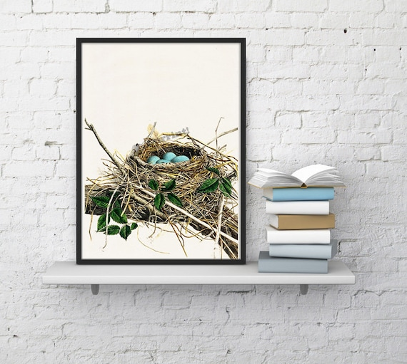 Robin nest with blue colored Eggs Nature collection art print ANI046WA4