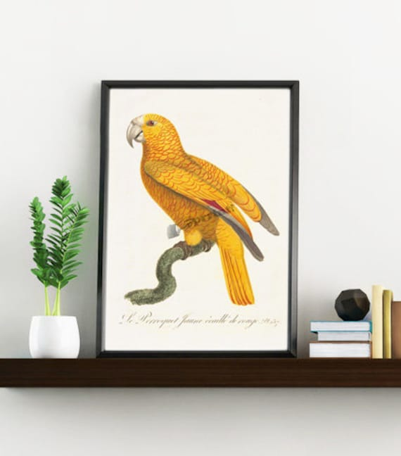 Yellow Parrot Exotic Bird print, Wild life print, Nature collection wall art, Wall decor, Home art, Poster, Digital prints, Prints ANI078WA4