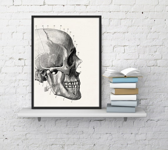 Human skull detail,  Anatomy art, Anatomical art, Wall art, Wall decor, Anatomy, Medical gift, Wholesale, Gift for doctor,  SKA012WA4