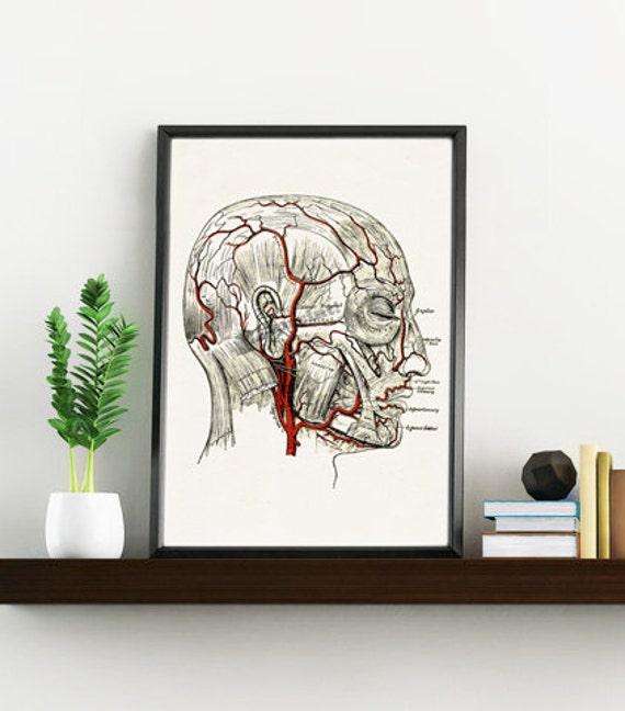 Human Head veins Anatomy Wall art decor SKA069WA4