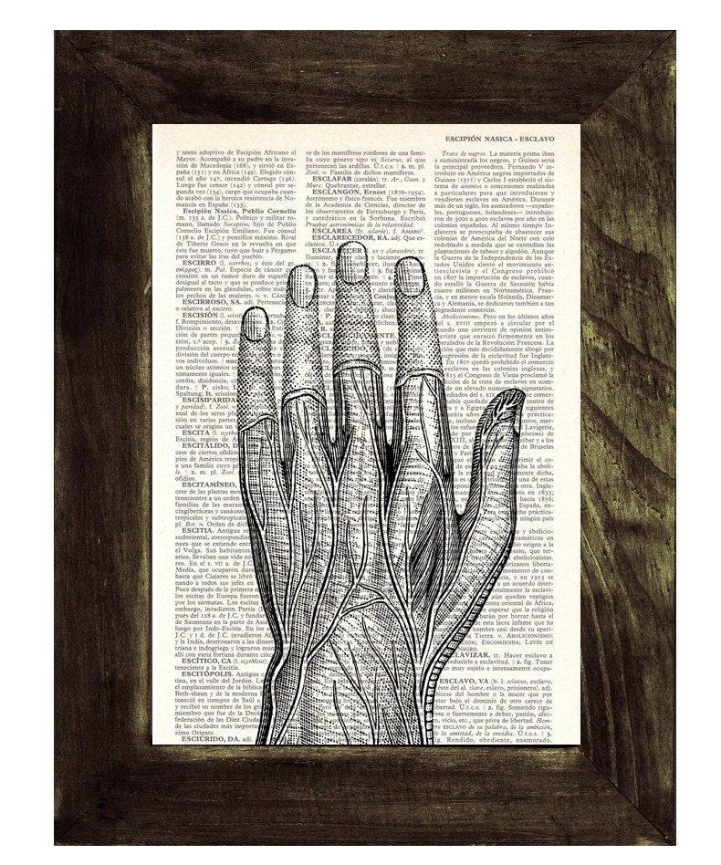 Medical Student Gift Anatomical Study Of A Human Hand On Vintage