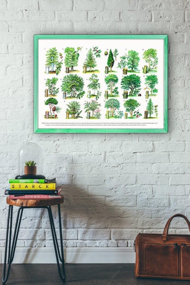 Spring Celebration Trees types Eucational Art Green Botanical image 0