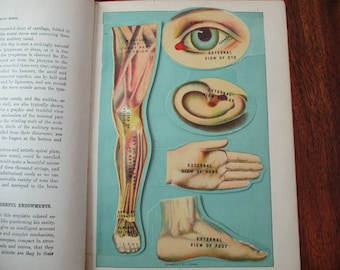 1900s overlay color lithograph MANIKIN from antique 1916 medical book - eye, ear, hand, foot, leg