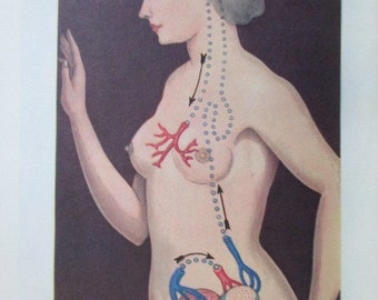 50s sex book - The Illustrated Encyclopedia of Sex- medical, illustrations, hardcover