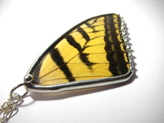 Butterfly Jewelry / Real Tiger Swallowtail Butterfly Pendant