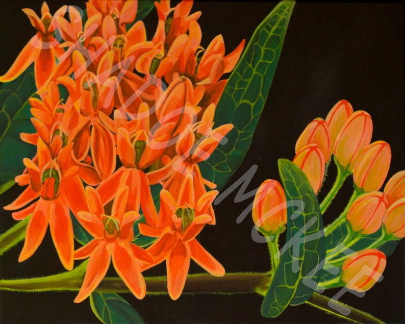 Butterfly Milkweed Wall Decor Wildflower Art Print of Original Painting Great Gift for Women Modern Art PrintPoster Collectible Series