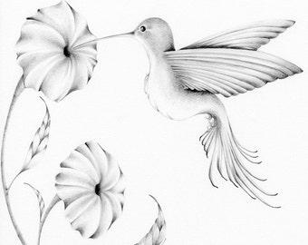 Bird Art Drawing Pencil