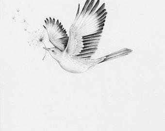 Bird Drawing Giclee Fine Art Print Modern Minimalist Wall Black And White Flying Dove Monochromatic