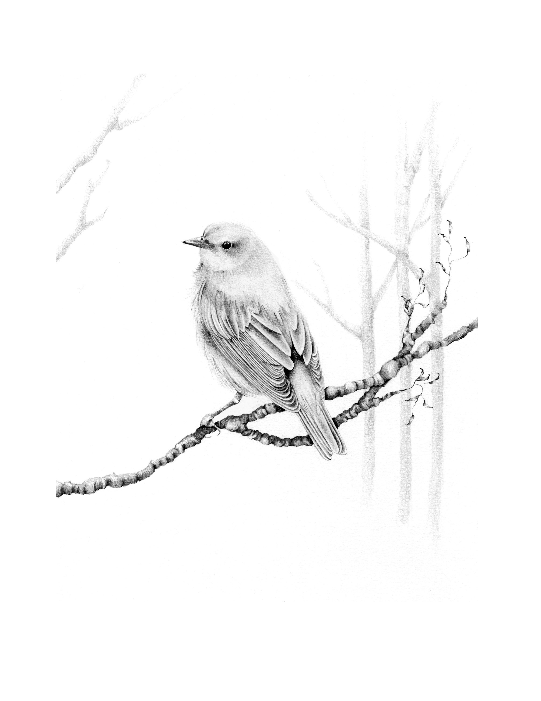 Bird drawing giclee fine art print pencil drawing bird wall art minimalist bird drawing original art print illustration bird nature decor